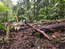 Fallen trees need to be removed from the walking trails in the Protected Area